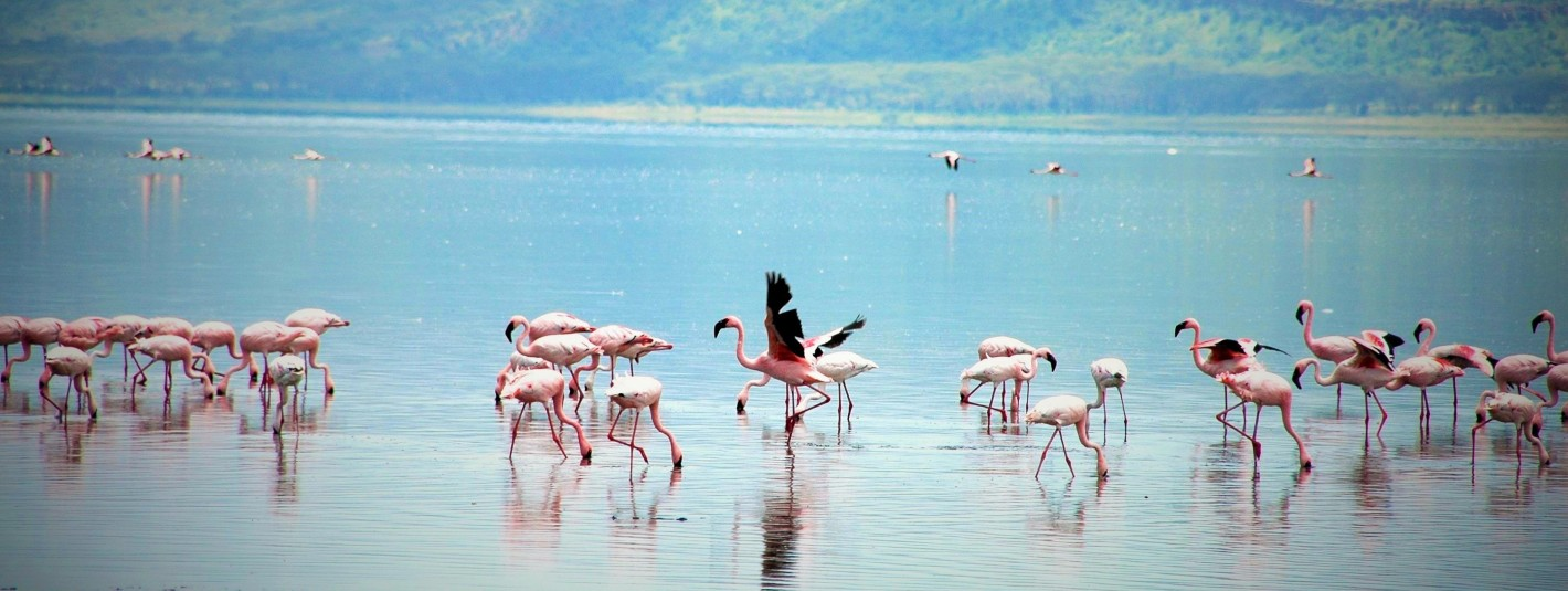 World-fo-kids_Flamingos_Kenia_Reise_Kinder