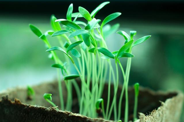 Travel_Plant_2